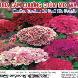 cam-chuong-chum-mix-va68