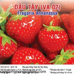 dau-tay-va02
