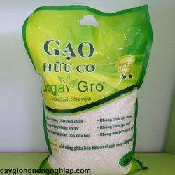gao-huu-co-huong-lai