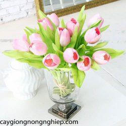 hoa-tuylip