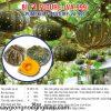 thumbnail_2_3ad867f0bfb63b8f3e60f076a4dca7b4
